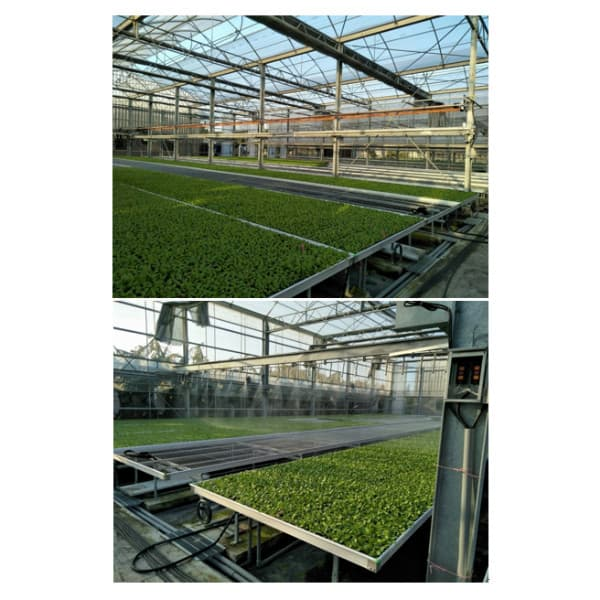 自動化溫室灑水系統 Automated sprinkler system in greenhouse